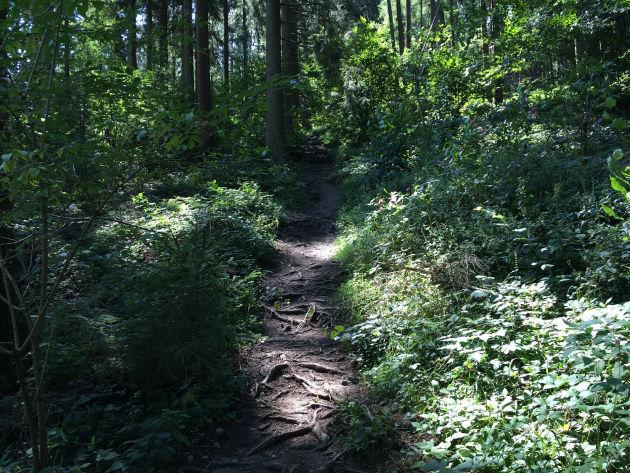 Der schönere Weg führt auf schmalen Waldpfaden - über Stock und Stein.