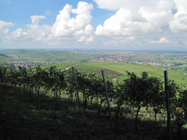 Blick übers Weinanbaugebiet am Rande von Freiburg