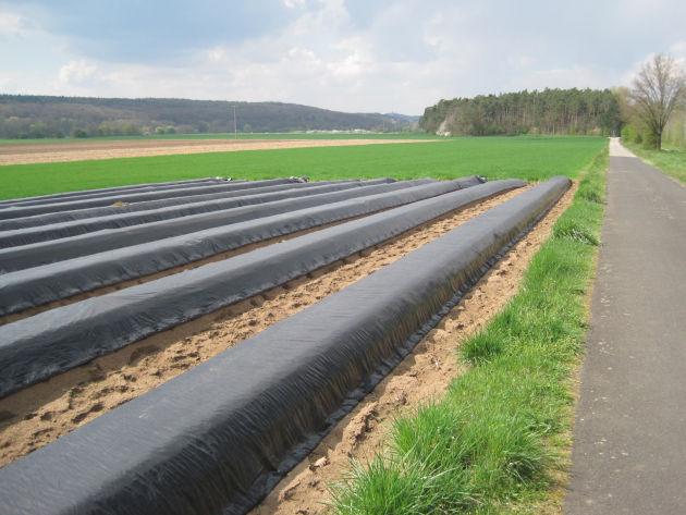 Spargel im Vordergrund - Gras im Hintergrund