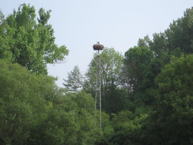Am Wegesrand gibt es viel zu entdecken: z.B. dieses Storchennest
