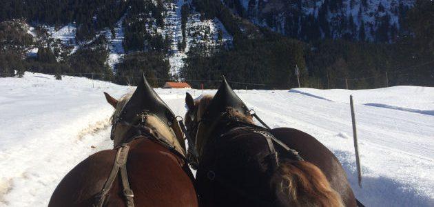 mupfel_164 – Pferdekutschenfahrt und Renate Bergmann