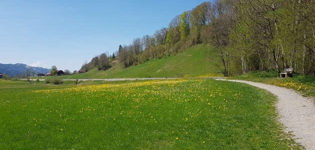mupfel_226 – (Un)glückliche Gartenarbeit und Hinternisse