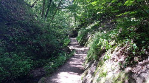 Bild - Blick in die moosgruene Drachenschlucht bei Eisenach