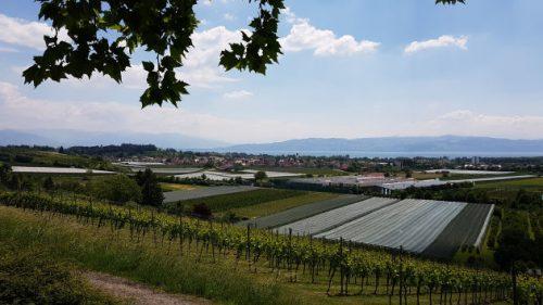 Blick über Kressbronn zum Bodensee und österreichische Alpen