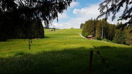 Bild grüne Wiese - auf dem Weg zur Siedelalpe