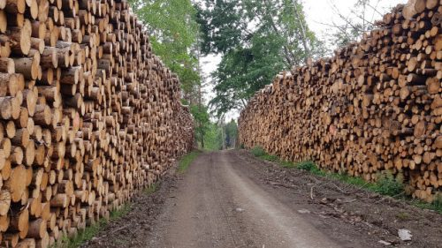 Auf dem Rückweg zum Auto: Holz, Holz, Holz