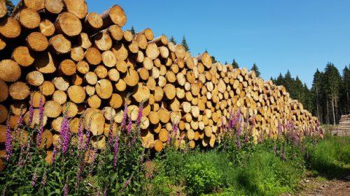 Riesige Stapel von Holzstämmen