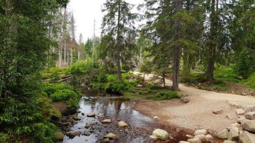 Im westlichen Harz ist die Landschaft ganz anders...