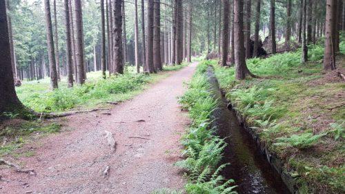 Am Dammgraben entlang