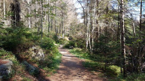 Wunderschöner Wanderweg Richtung Eckertalsperre