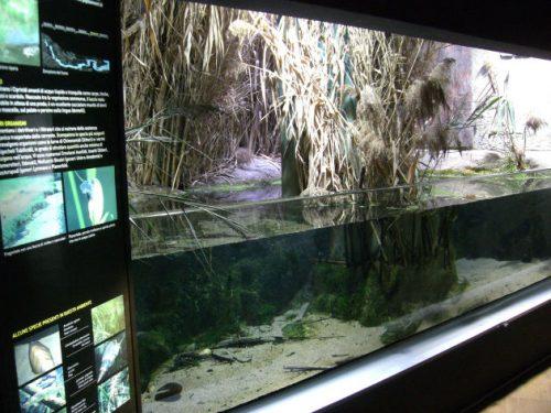 Aquarium in Mailand