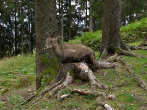 Im Tierpark Rosegg in Kärnten