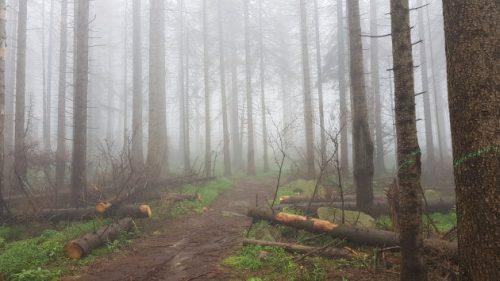 Bild eines nebeligen Waldes