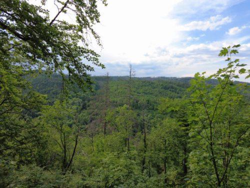Blick über den Harz auf einer kleinen Wanderung