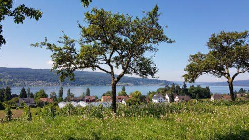 Blick von der Hochwacht auf der Insel Reichenau