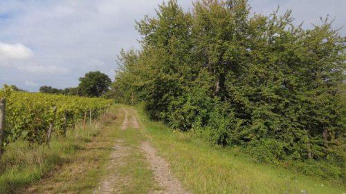 Am Weinfeld entlang