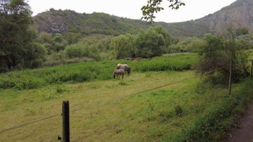 Pferde auf einer Koppel am Wegesrand